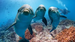 dolphins shutterstock_478929451