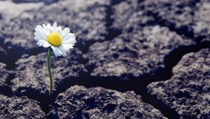 earth ending daisy - shutterstock_1489001609