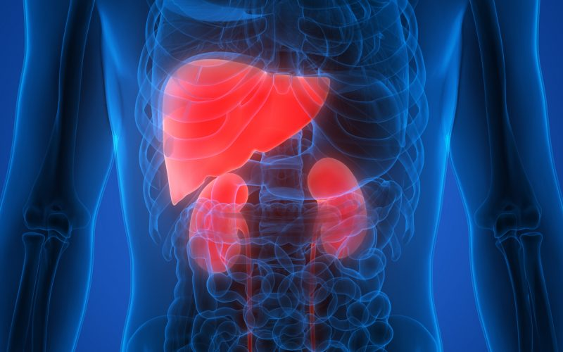 The Best Supplements & Herbs to Nurture Your Liver & Kidneys