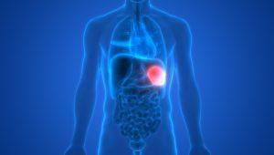 spleen health - shutterstock_1021738180